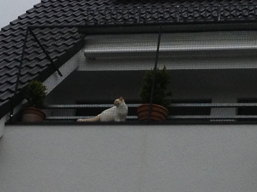 Katze am Katzennetz