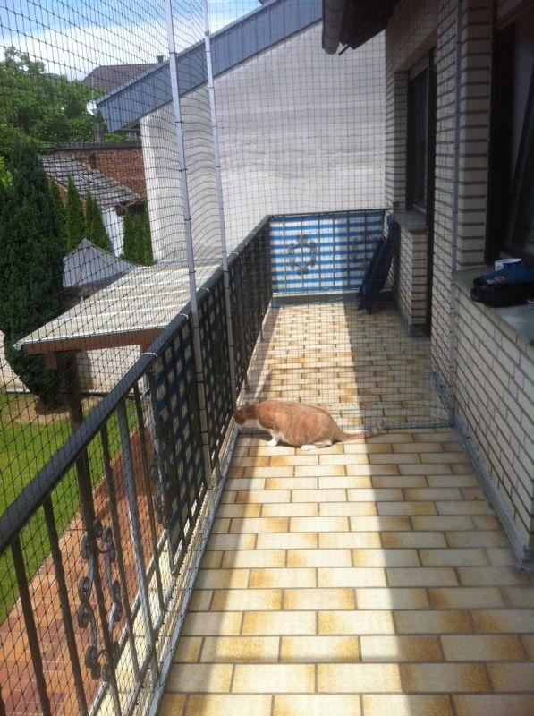 Katze Katzennetz Balkon