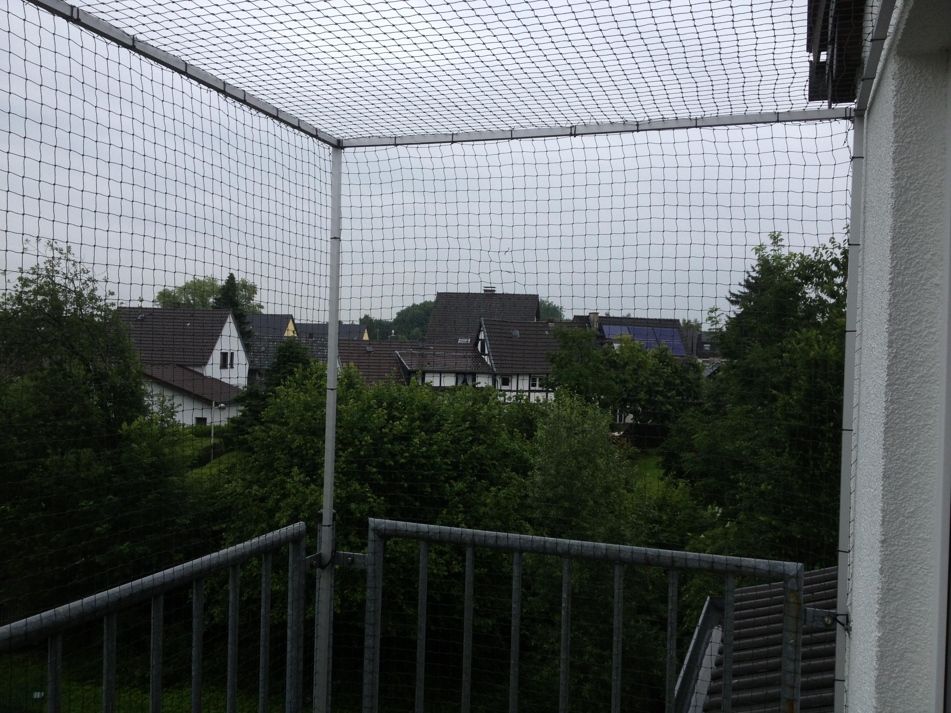 katzennetz f r balkon in bonn fenster katzensicher machen. Black Bedroom Furniture Sets. Home Design Ideas
