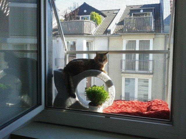 Fensterschutz für Katzen. Die Katzenloggia  Katzennetze NRW