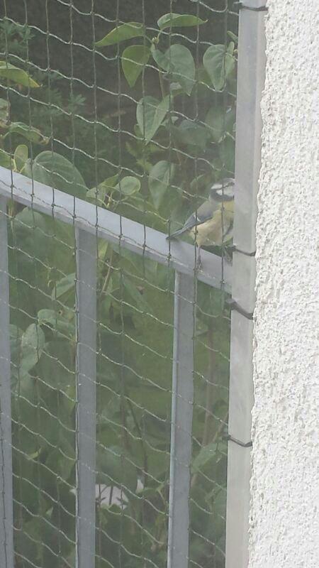 Vogel Katzennetz
