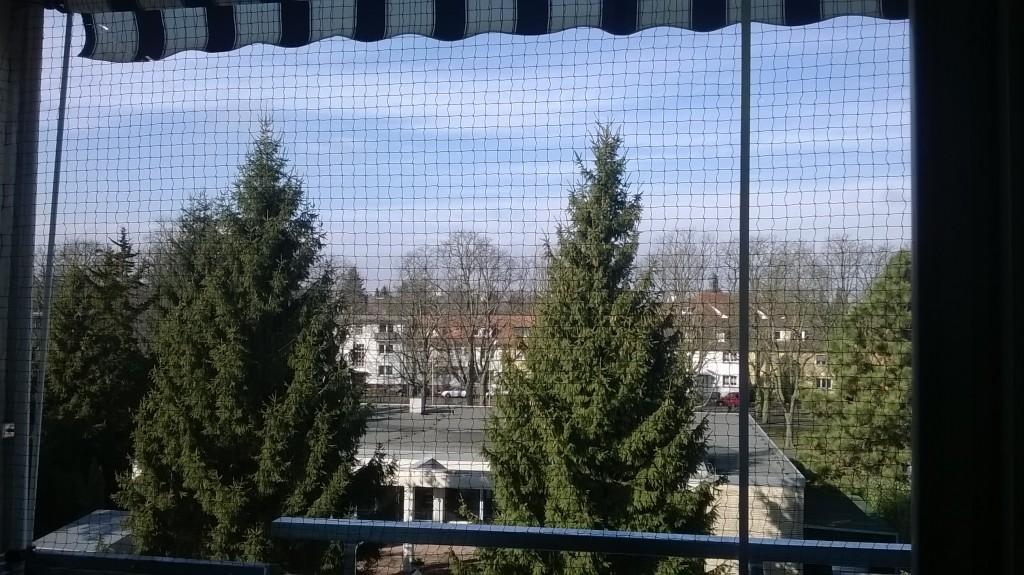 Katzennetz in Offenbach