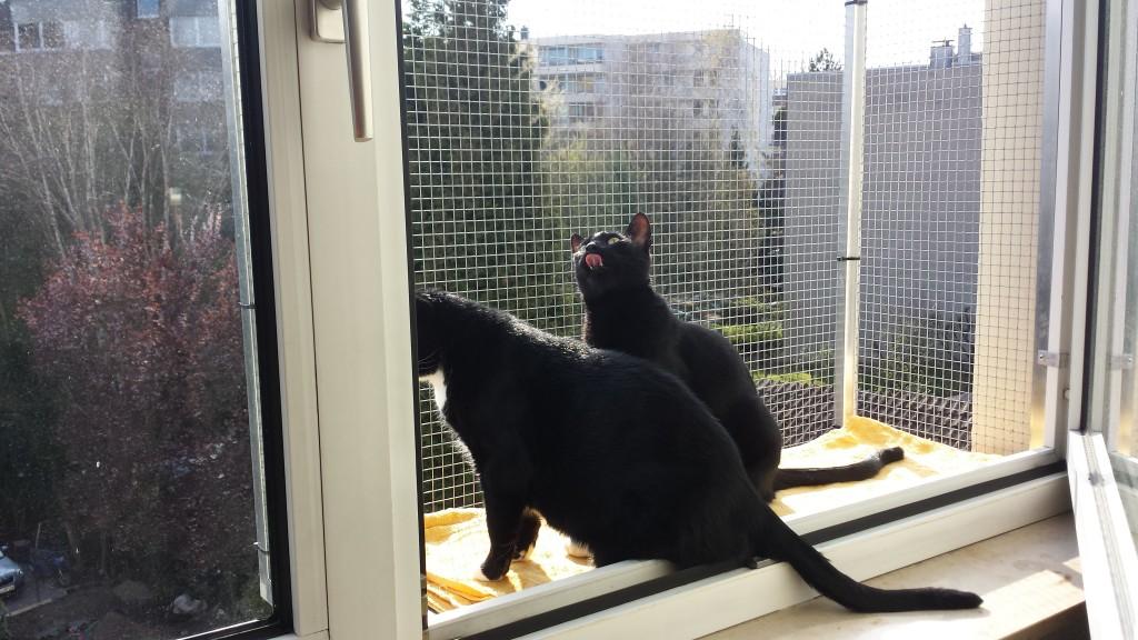 Katzenverhalten Katzenbalkon