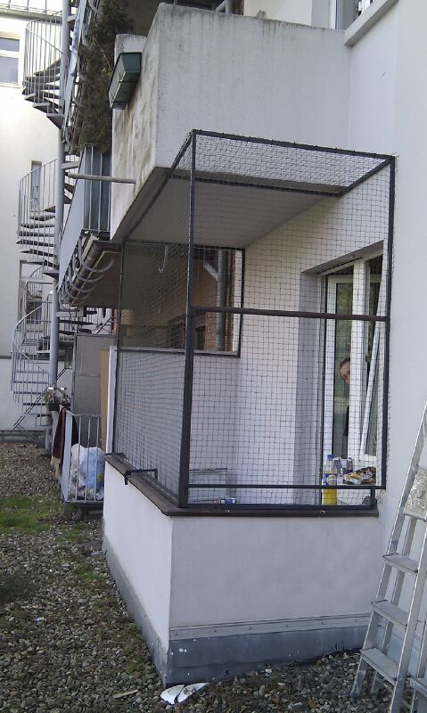 Katzengehege Balkon für Abessinierkatze