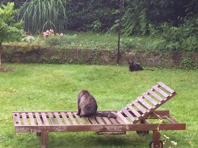 Katzengehege System zur Gartensicherung