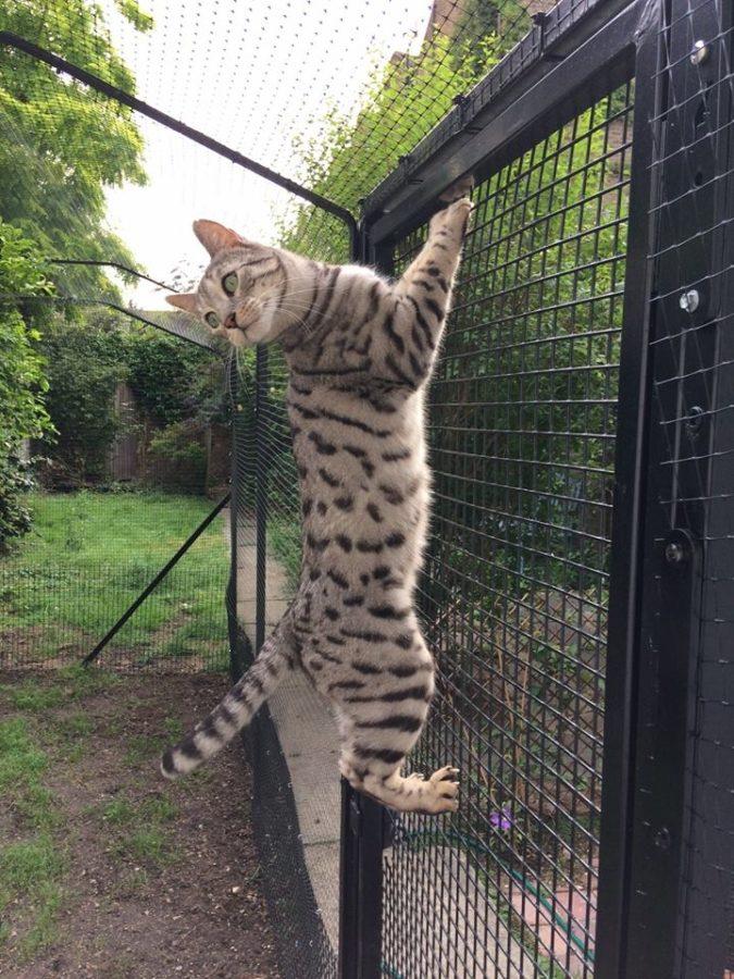 Katzennetz fuer Bengal-Katzen