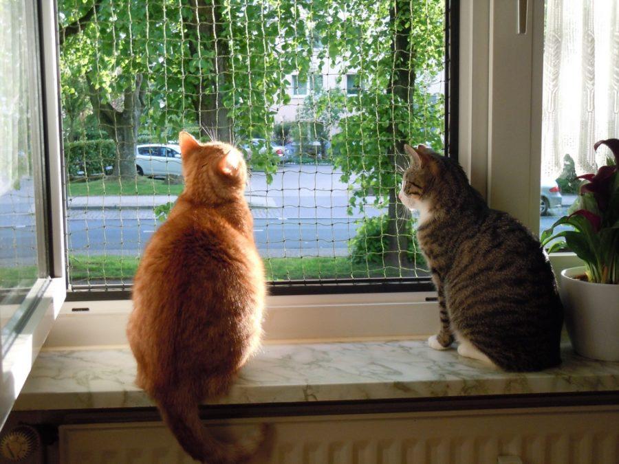 Katzen am gesicherten Fenster