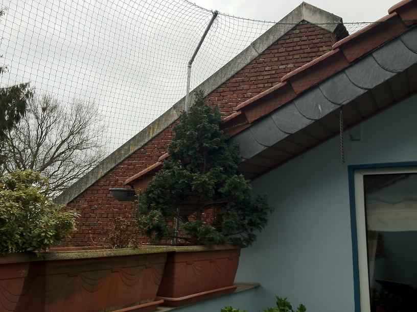 Katzennetz in Wegberg auf einer Dachterrasse