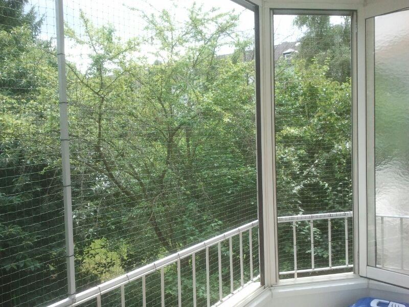 Fensterfront mit Katzennetz