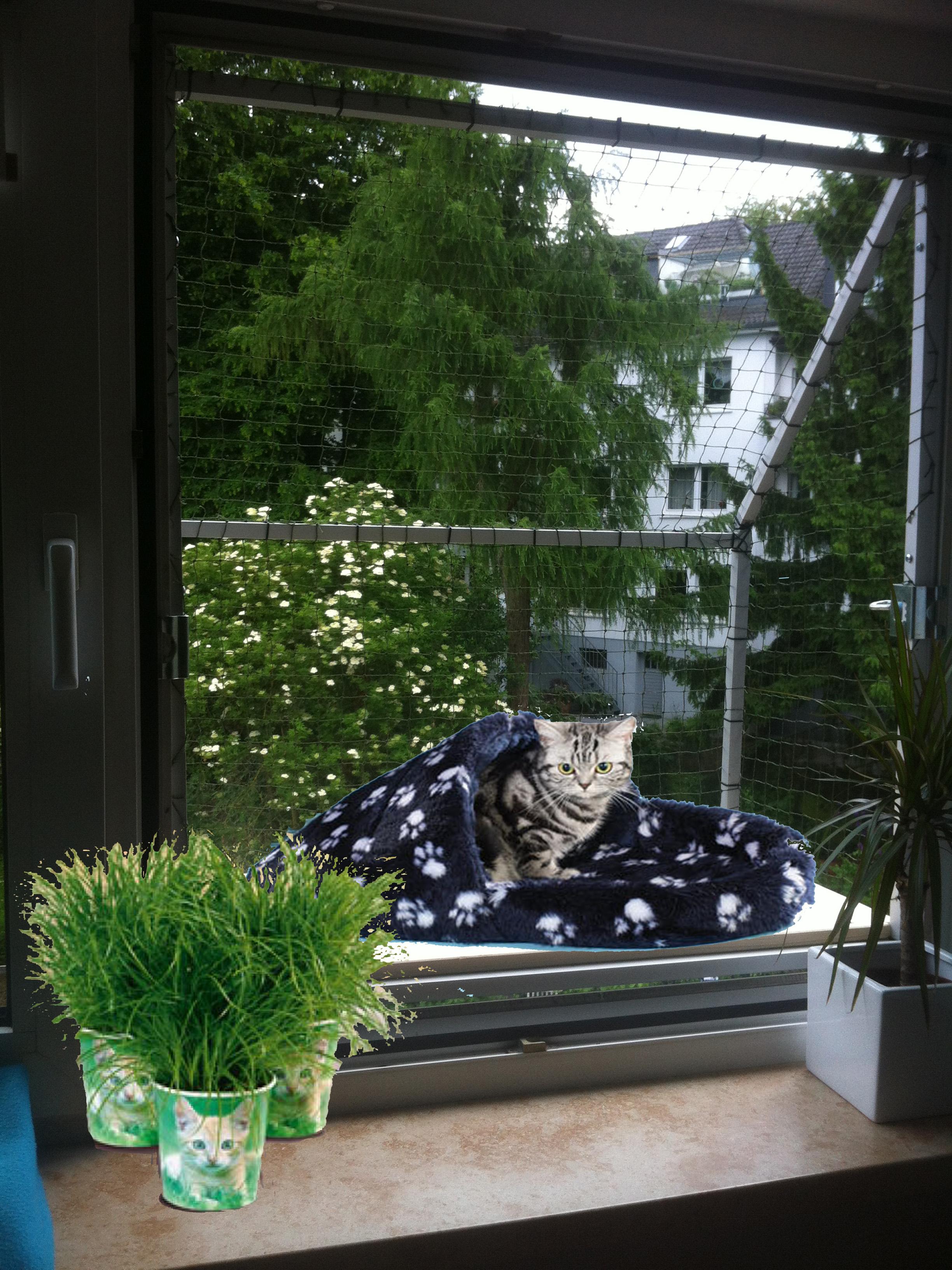Katzenbalkon Katzenloggia Katzennetze Nrw Der Katzennetz Profi