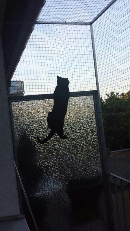Katze im Katzennetz