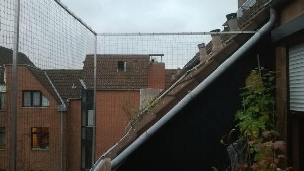 Katzennetz anbringen lassen in Köln