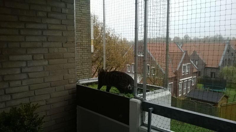 Katzenspielplatz mit Katzennetz in Oldenburg