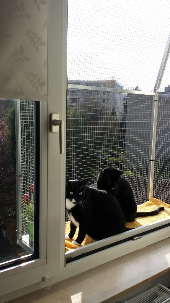 Katzen im Katzenbalkon