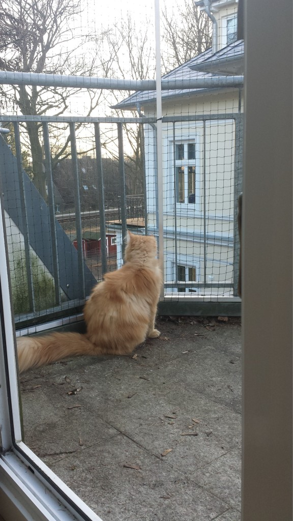 sicherheit durch Katzennetz