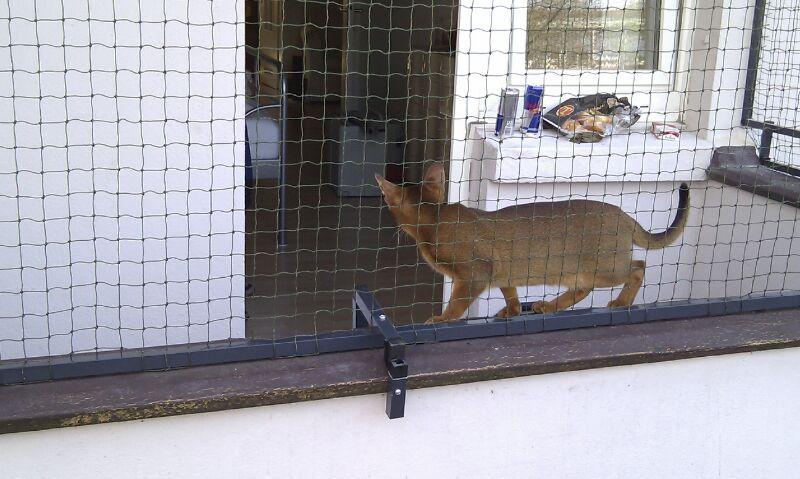 Abessinierkatze im Katzengehege auf Balkon