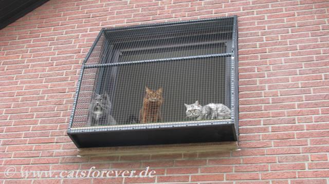 der katzenbalkon wurde erobert katzennetze nrw der katzennetz profi. Black Bedroom Furniture Sets. Home Design Ideas