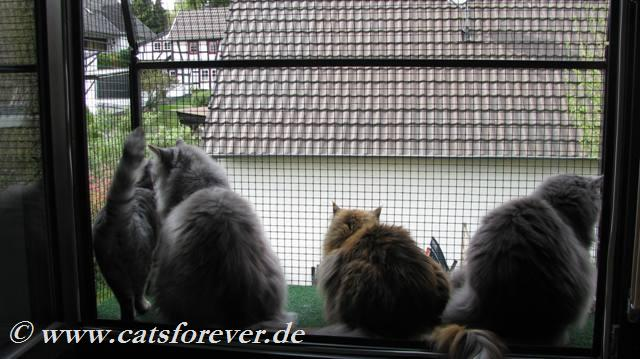 Katzenbalkon vom Katzennetzprofi