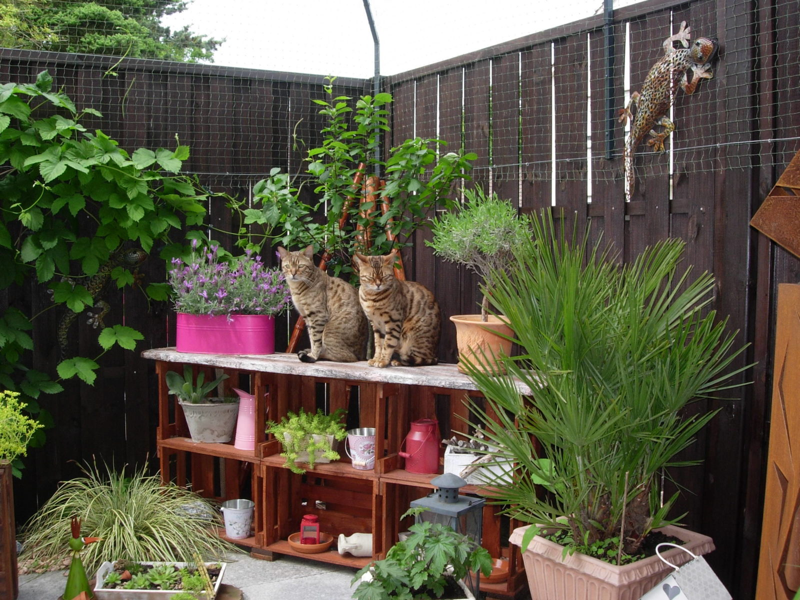 bengalkatzen-geniessen-den-freigang