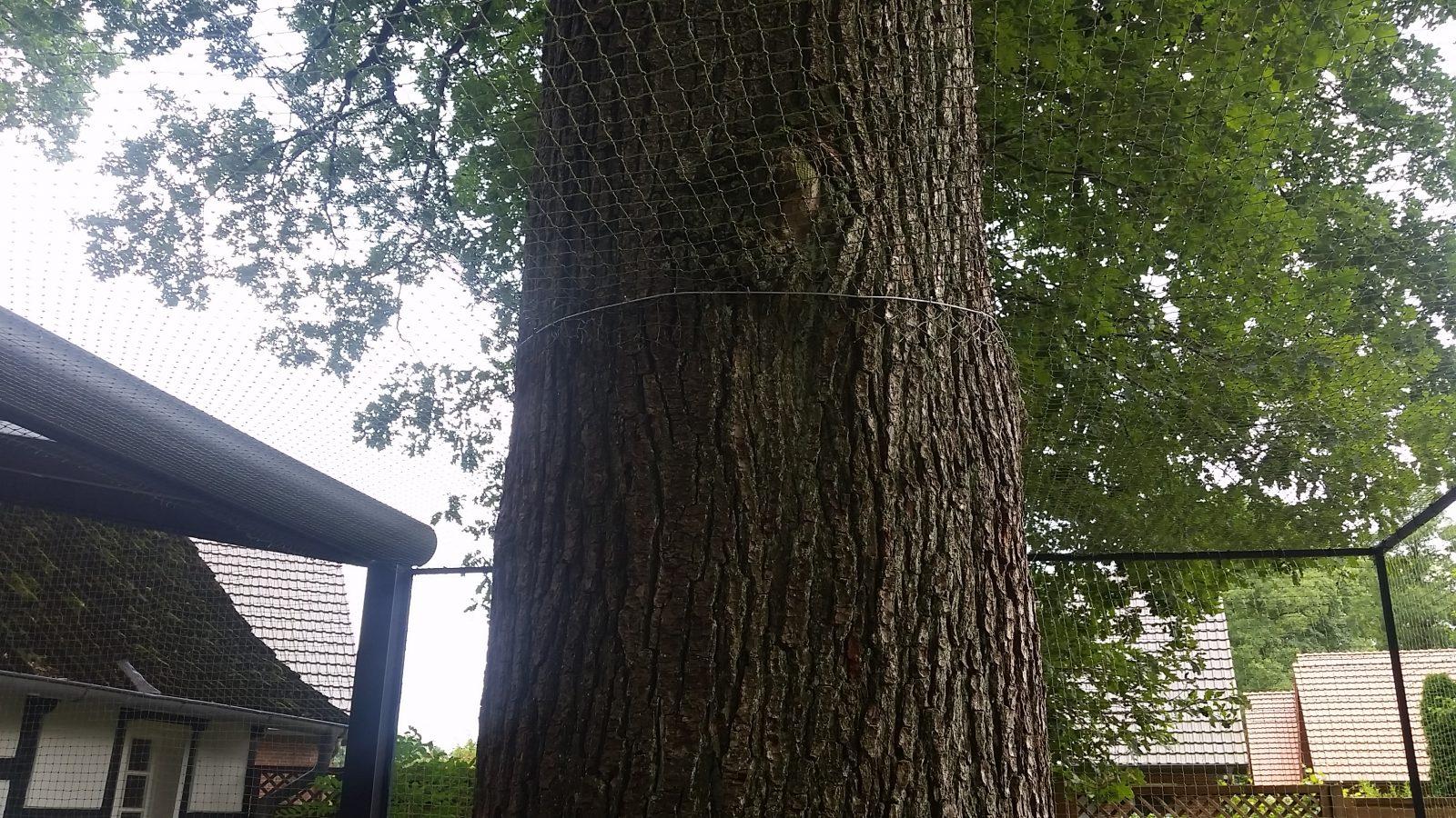 Baum durch Katzennetz Detail