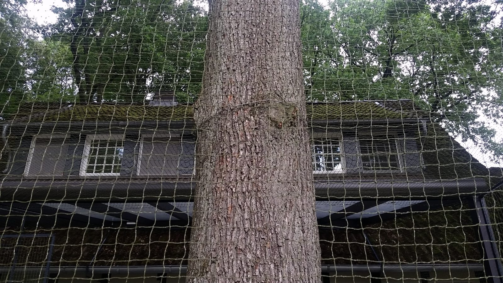 Katzennetz trotz Baum