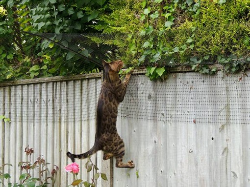 Katzennetz katzennetz ohne bohren katzennetz balkon for Katzennetz balkon mit scout garden
