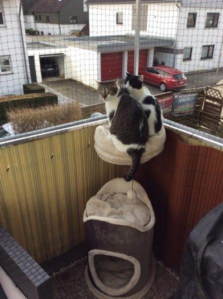 Balkon_katzennetz_steinheim
