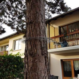Baum absichern Katzen klettern