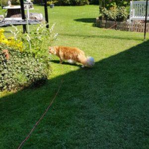 Katzennetz Spezialist Katzenzaun Gartensicherung